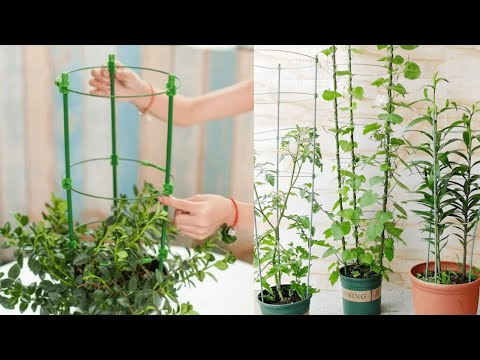 Tomato Plant Support Cage Review 2020 - Plant Support Cage