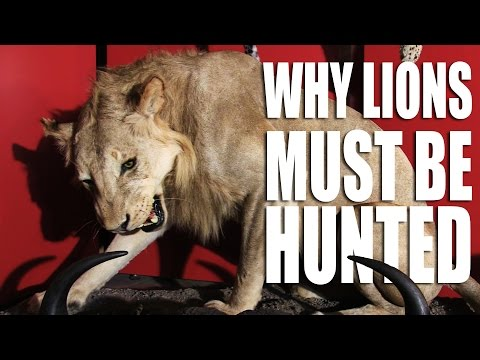 Why Lions Must be Hunted