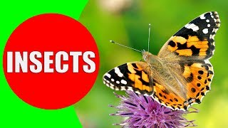 INSECTS FOR KIDS Learning – Insect Names and Sounds for Children, Toddlers, Kindergarten & Preschool