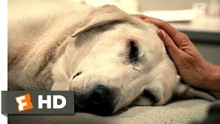 Marley & Me (5/5) Movie CLIP - You're a Great Dog, Marley (2008) HD