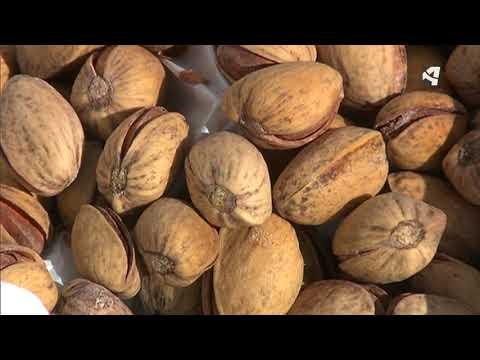 Fotograma del vídeo: El pistacho, un cultivo de moda en Aragón