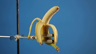 Бананы: правда ли к нам привозят только кормовые?