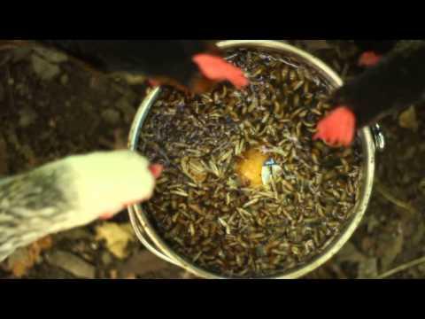 Paglilinis mula labatiba bituka parasites na may soda review