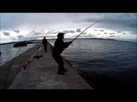 Fiskeri efter havål i England