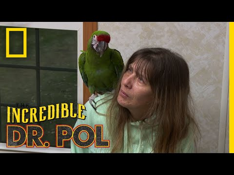 A Macaw With Loose Poop | The Incredible Dr. Pol