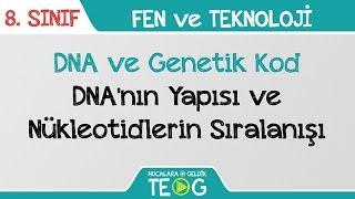 DNA ve Genetik Kod - DNA'nın Yapısı ve Nükleotidlerin Sıralanışı