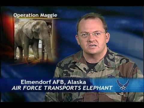 Operation Maggie Migration--AF News Report