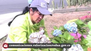 Armenia es un Jardín Microhistoría Alba Rosa