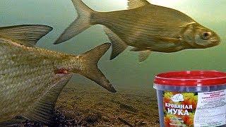 Кто использует рыбную муку в прикормках