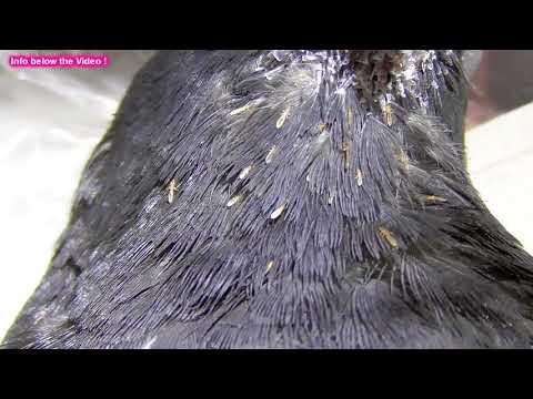 Die Würmer beim Kind die Kürbissamen