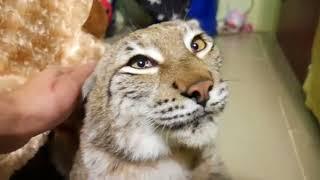 #114 Подборка видео с животными / #114 Best animals video compilation