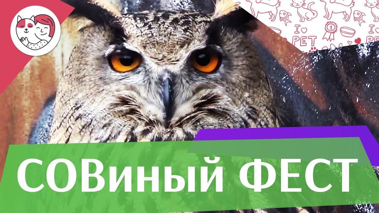 Совиный фестиваль на ilikepet