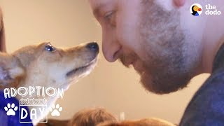 Shy Little Dog Transforms In New Home - MUFFIN   The Dodo Adoption Day