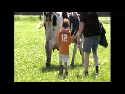 Koeien schilderen voor het goede doel