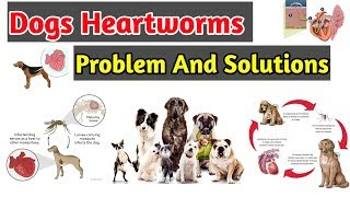 How to Treat Heartworms in Dogs / Dog Heartworms problem and Solutions