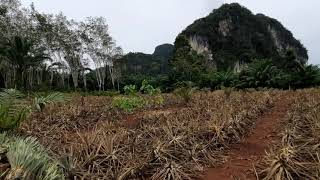 One Rai Square Shape Flat Land for Sale in Ao Nang, Krabi