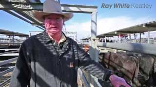 Mount Gambier Prime Market Review - 22nd july 2015