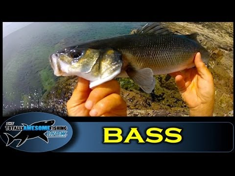 Bass fishing with Lures – The Totally Awesome Fishing Show