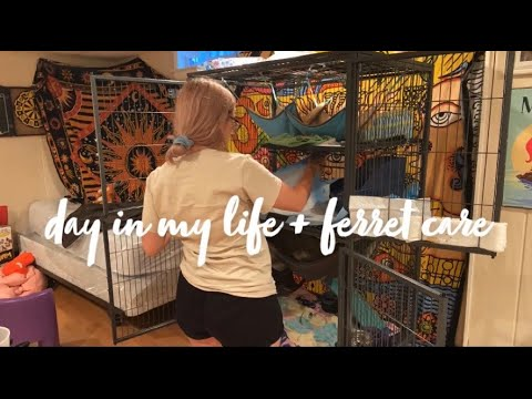 , title : 'A Day in My Life + Ferret Care