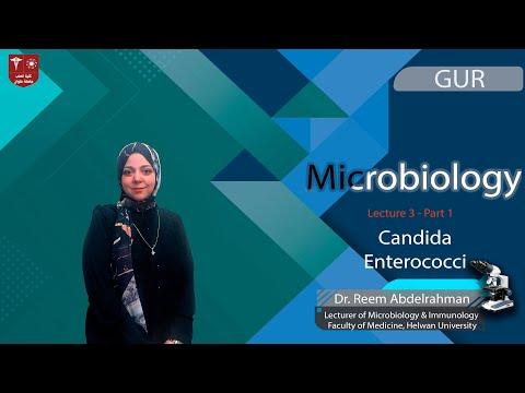 Krónikus bakteriális prostatitis