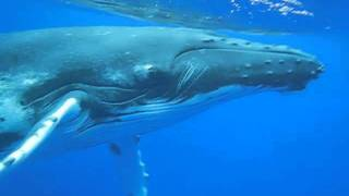 Captain Jens Köthen swimming with whales