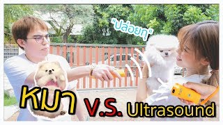 Dog vs Ultrasound!! 🐶🔫🔥