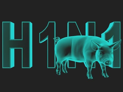 Video Swine Flu: What You Need to Know (Biology/Diseases)