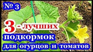 Сорта огурцов для Подмосковья для открытого грунта