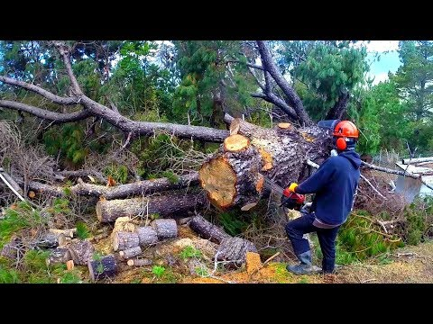 $100 Chinese chainsaw test and review by a professional logger