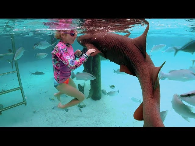 Swimming With Sharks (Without a Shark Cage)