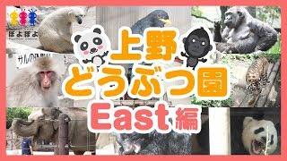 上野動物園の動画🐾東園編🐻クマ🐘ゾウ🐹トラ🐼パンダなど🐾UenoZoo