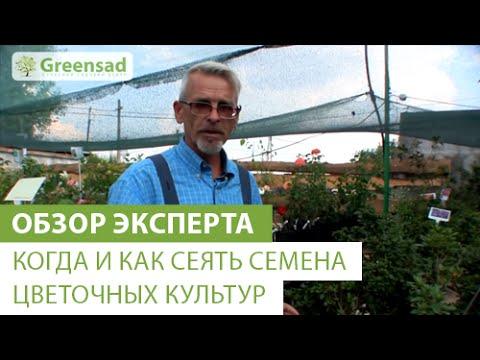 Когда и как сеять семена цветочных культур