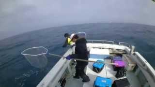 ELECTRIC JIGGINGによる鰤釣果 電動ジギング スクイッドシェイク実践