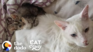 Abandoned Cat Was Antisocial Until A Tiny Kitten Forced Him To Play With Her | The Dodo Cat Crazy by The Dodo