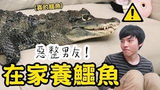 【惡整喵喵】瞞著男友偷偷在家養鱷魚🐊❤︎古娃娃WawaKu