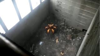 Overhead Crane Manufacturers