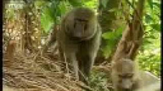 Chimpanzee - Infancy