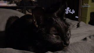 고양이가 에픽하이 'Lullaby For A Cat'을 들으면 정말 잠들까 ?  [여름이야]