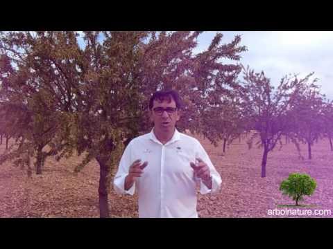Fotograma del vídeo: Precios de la Almendra 2016. Arbolnature