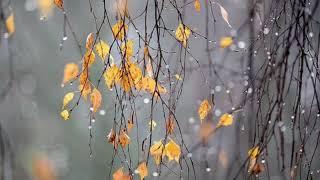 Авторские Стихи/Стихи на Русском языке/Уходит Осень