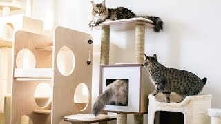 Comparing Our Cat Trees