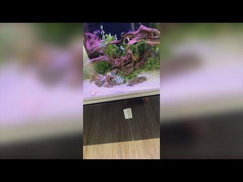 Aquarium komplett neu gemacht😎 MontanaBlack Instagram Story