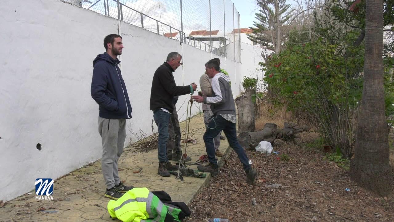 AÚN PUEDEN INSCRIBIRSE EN EL 'CURSO BÁSICO DE ARBORICULTURA Y PODA DE PALMERAS'