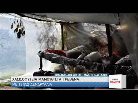 Γρεβενά | Χασισοφυτεία μαμούθ | 18/07/2020 | ΕΡΤ