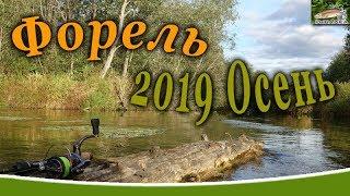 Рыбалка в ленинградской области осенью 2019