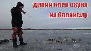 Зимняя рыбалка на гусинке 2019