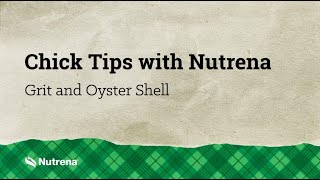 Chick Tips with Nutrena: Feeding Grit and Oyster Shell to Chickens