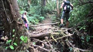 Trekking I Cameron Highlands