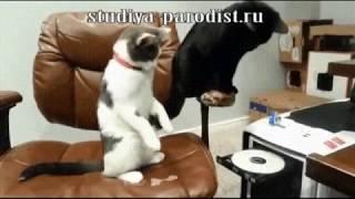 Коты и сидиром (Озвучка)