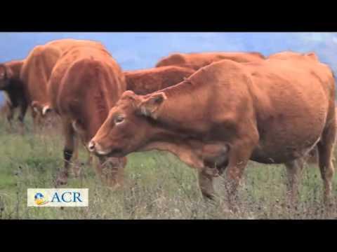 Conoscere la vita rurale Ambiente Economia Tradizioni. Puntata 10